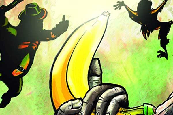 Banana Bandidos - Ausschnitt - Foto von Mogel Verlag