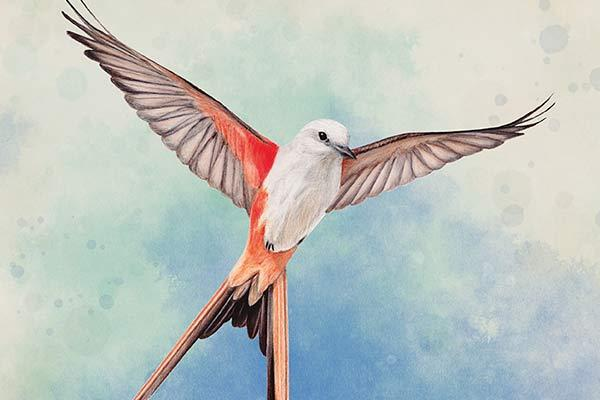 Flügelschlag - Ausschnitt - Foto von Feuerland Spiele