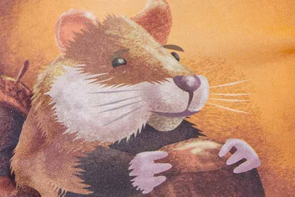 Hamstern - Ausschnitt - Foto von NSV
