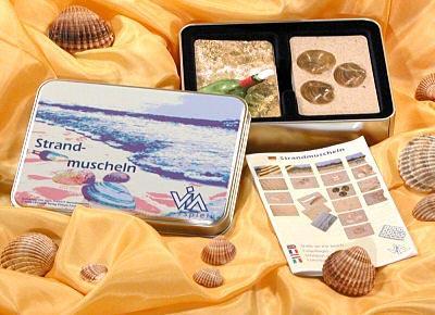 Strandmuscheln von VIA Spiele
